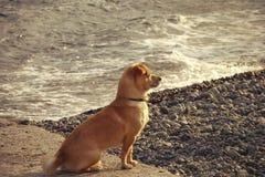 Σκυλί στην παραλία Στοκ φωτογραφία με δικαίωμα ελεύθερης χρήσης