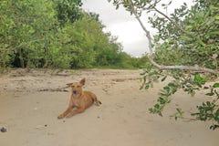 Σκυλί στην παραλία Στοκ Φωτογραφίες