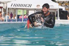 Σκυλί στην πισίνα Στοκ φωτογραφία με δικαίωμα ελεύθερης χρήσης