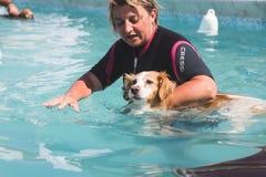 Σκυλί στην πισίνα Στοκ εικόνα με δικαίωμα ελεύθερης χρήσης