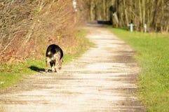 Σκυλί στην πλευρά μιας πορείας Στοκ Φωτογραφίες