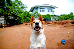 Σκυλί στην Ταϊλάνδη Στοκ φωτογραφίες με δικαίωμα ελεύθερης χρήσης