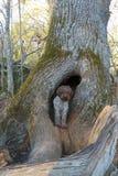 Σκυλί στην τρύπα Στοκ εικόνες με δικαίωμα ελεύθερης χρήσης