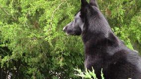Σκυλί στη βροχή απόθεμα βίντεο