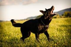 Σκυλί στη δράση Στοκ εικόνα με δικαίωμα ελεύθερης χρήσης