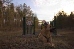 Σκυλί στη σωλήνωση Στοκ Εικόνα