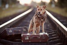 Σκυλί στις ράγες με τις βαλίτσες Στοκ Φωτογραφία