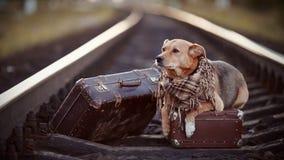 Σκυλί στις ράγες με τις βαλίτσες Στοκ φωτογραφία με δικαίωμα ελεύθερης χρήσης