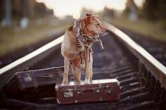 Σκυλί στις ράγες με τις βαλίτσες Στοκ Εικόνα