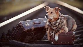 Σκυλί στις ράγες με τις βαλίτσες Στοκ Φωτογραφίες