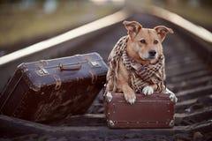 Σκυλί στις ράγες με τις βαλίτσες Στοκ εικόνες με δικαίωμα ελεύθερης χρήσης