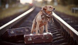 Σκυλί στις ράγες με τις βαλίτσες Στοκ εικόνα με δικαίωμα ελεύθερης χρήσης