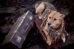 Σκυλί στις ράγες με τις βαλίτσες Στοκ φωτογραφίες με δικαίωμα ελεύθερης χρήσης