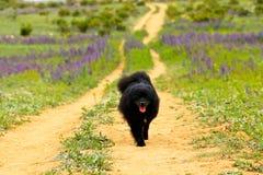 Σκυλί στον τρόπο Στοκ εικόνες με δικαίωμα ελεύθερης χρήσης