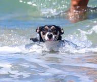 Σκυλί στον ωκεανό στοκ φωτογραφίες