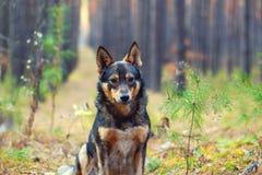 Σκυλί στο δάσος Στοκ εικόνες με δικαίωμα ελεύθερης χρήσης
