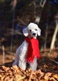 Σκυλί στο δάσος Στοκ φωτογραφίες με δικαίωμα ελεύθερης χρήσης