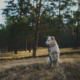 Σκυλί στο δάσος Στοκ Φωτογραφία