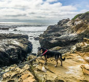 Σκυλί στο βράχο Στοκ Φωτογραφίες