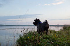 Σκυλί στο ηλιοβασίλεμα στοκ εικόνες