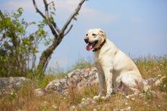 Σκυλί στο λιβάδι Στοκ εικόνα με δικαίωμα ελεύθερης χρήσης