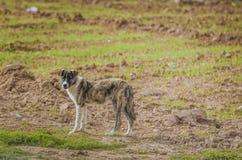 Σκυλί στο λιβάδι Στοκ Εικόνες
