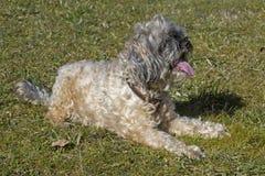 Σκυλί στο λιβάδι Στοκ φωτογραφίες με δικαίωμα ελεύθερης χρήσης