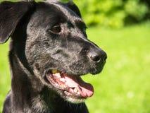 Σκυλί 133 στο λιβάδι Στοκ Εικόνες