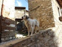 Σκυλί στο ιστορικό κέντρο στοκ φωτογραφία