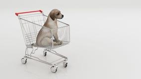 Σκυλί στο κάρρο αγορών που απομονώνεται στο λευκό Στοκ Εικόνες