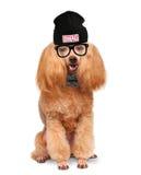 Σκυλί στο καπέλο μόδας με τα γυαλιά Στοκ εικόνα με δικαίωμα ελεύθερης χρήσης