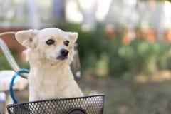Σκυλί στο καλάθι Στοκ εικόνα με δικαίωμα ελεύθερης χρήσης