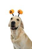 Σκυλί στο κοστούμι στοκ εικόνες με δικαίωμα ελεύθερης χρήσης