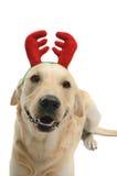 Σκυλί στο κοστούμι στοκ φωτογραφίες με δικαίωμα ελεύθερης χρήσης