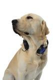 Σκυλί στο κοστούμι στοκ φωτογραφία με δικαίωμα ελεύθερης χρήσης
