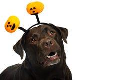 Σκυλί στο κοστούμι στοκ φωτογραφίες