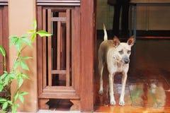 Σκυλί στο μέρος στοκ φωτογραφίες