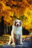 Σκυλί στο πάρκο φθινοπώρου στοκ φωτογραφίες με δικαίωμα ελεύθερης χρήσης