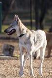 Σκυλί στο πάρκο Στοκ Φωτογραφία