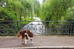 Σκυλί στο πάρκο Στοκ φωτογραφίες με δικαίωμα ελεύθερης χρήσης