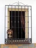 Σκυλί στο παράθυρο με τους μεσογειακούς φραγμούς στοκ φωτογραφία
