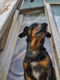 Σκυλί στο παράθυρο Στοκ φωτογραφία με δικαίωμα ελεύθερης χρήσης
