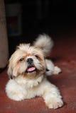 Σκυλί στο πεζοδρόμιο Στοκ Εικόνες