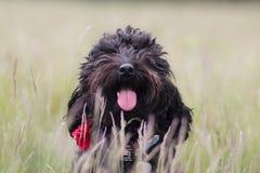 σκυλί στο πεδίο Στοκ εικόνα με δικαίωμα ελεύθερης χρήσης