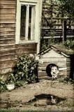 Σκυλί στο σκυλόσπιτο Στοκ εικόνες με δικαίωμα ελεύθερης χρήσης