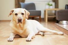 Σκυλί στο σπίτι Στοκ Εικόνες