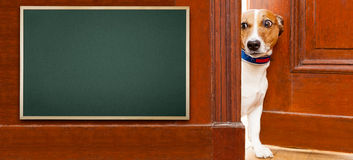 Σκυλί στο σπίτι Στοκ φωτογραφία με δικαίωμα ελεύθερης χρήσης