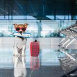 Σκυλί στο τερματικό αερολιμένων στις διακοπές Στοκ Εικόνες