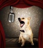 Σκυλί στο τραγούδι της απόδοσης στη σκηνή Στοκ Φωτογραφία