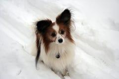 Σκυλί στο χιόνι Στοκ εικόνα με δικαίωμα ελεύθερης χρήσης